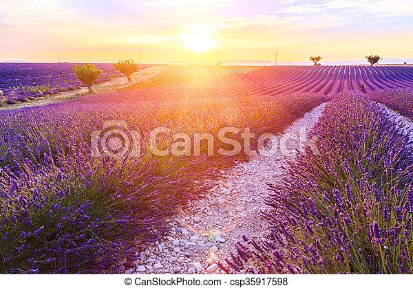 giacimento lavanda, tramonto, bello - csp35917598