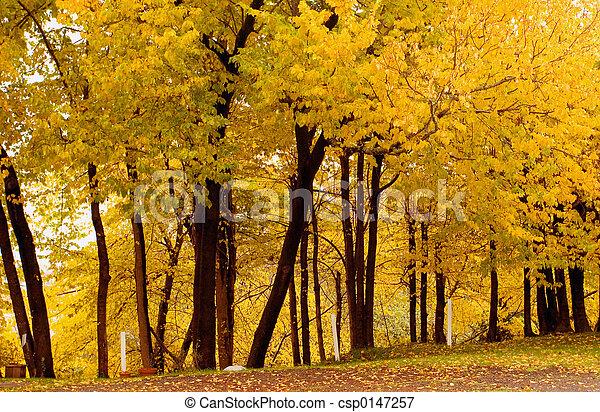 grove1, cadere, sughero, colorare, olmo - csp0147257