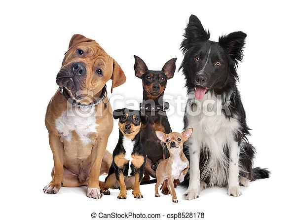 gruppo, cinque, cani - csp8528178