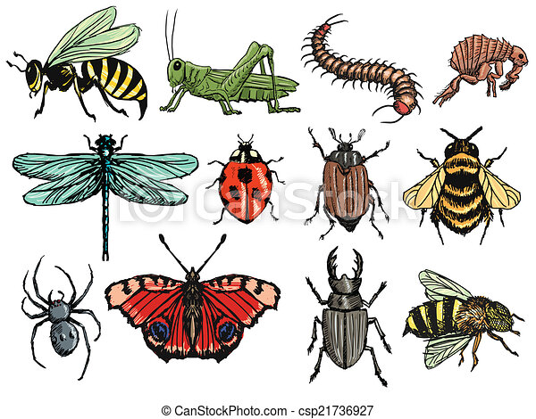 insetti - csp21736927