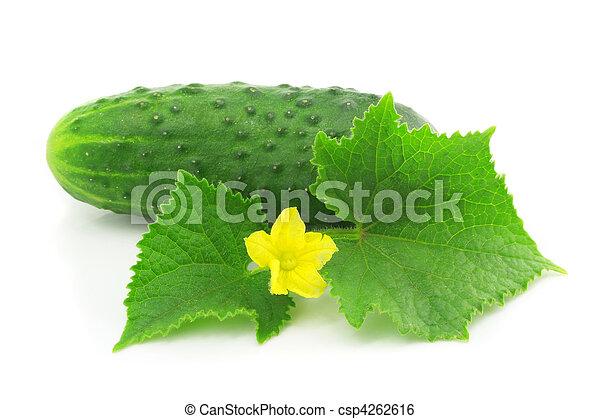 isolato, frutta, verde, mette foglie, verdura, cetriolo - csp4262616
