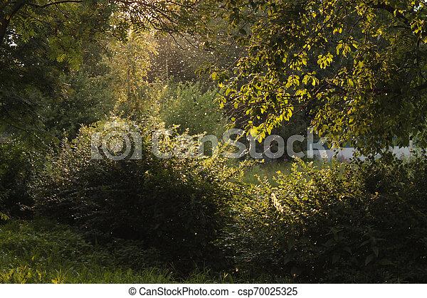 luce, dietro, raggi, albero, park. - csp70025325