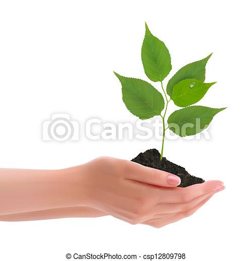 mani, presa a terra, giovane pianta - csp12809798