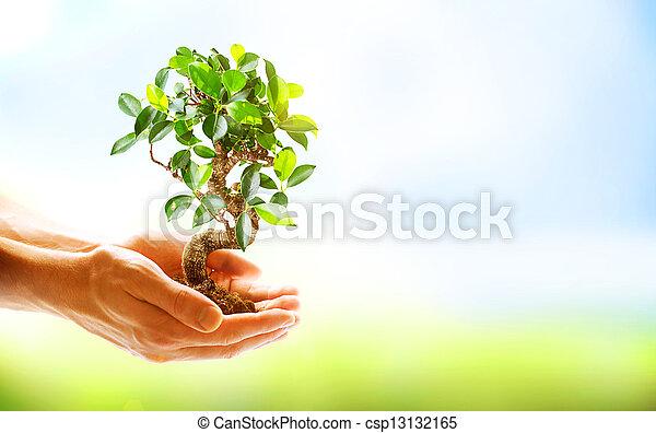 mani, presa a terra, sopra, fondo, verde, umano, natura, pianta - csp13132165