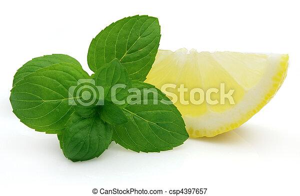 menta, limone, succoso - csp4397657