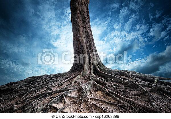 mistero, vecchio, luce, albero, luna, paesaggio, fondo, scenico, magia, radici, night. - csp16263399