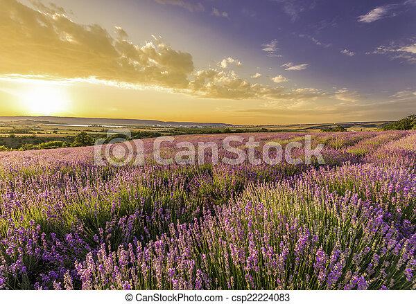montagne, strabiliante, tramonto, giacimento lavanda - csp22224083
