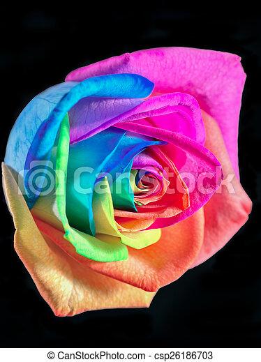 multicolor, rosa - csp26186703