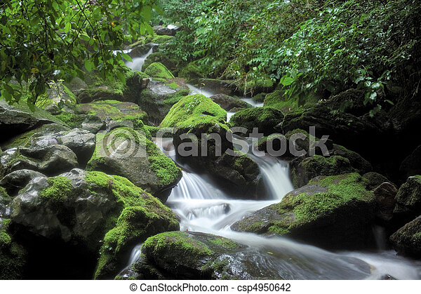 natura, vista - csp4950642