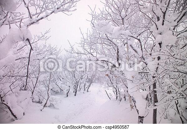 natura, vista - csp4950587