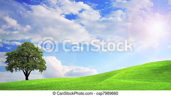 paesaggio verde, natura - csp7989660