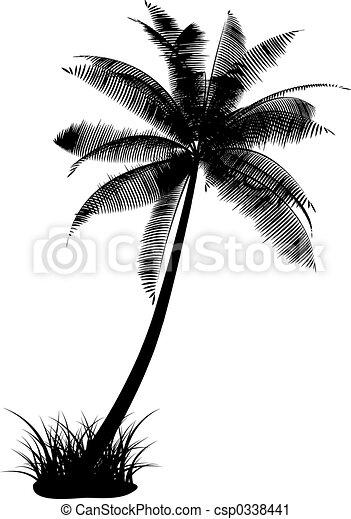 palma - csp0338441
