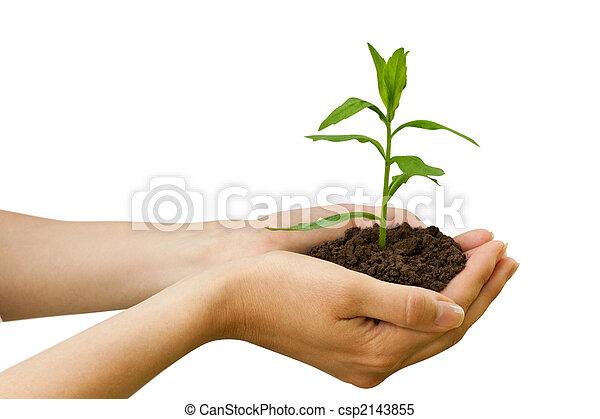 pianta, agriculture., mano - csp2143855