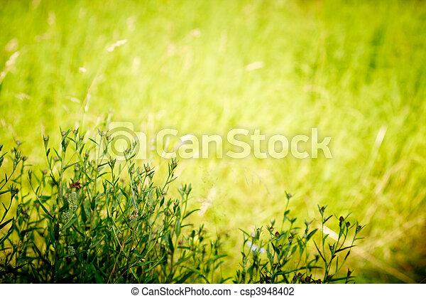piante, naturale, spazio, text., profondo, forest., lighting., tramonto, selvatico - csp3948402