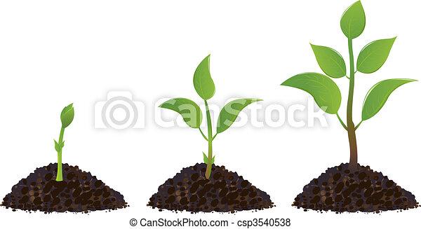 piante, verde, giovane - csp3540538