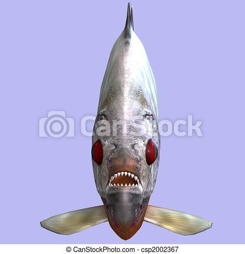 piranha - csp2002367