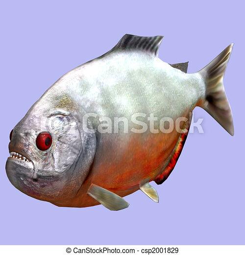 piranha - csp2001829