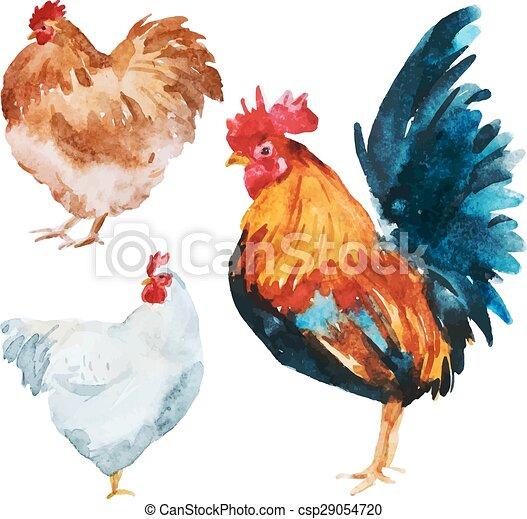 pollo, acquarello - csp29054720