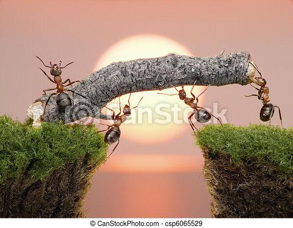 ponte, costruire, sopra, formiche, acqua, squadra, alba - csp6065529