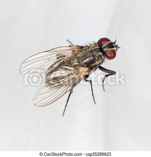 primo piano, fly. - csp35289623