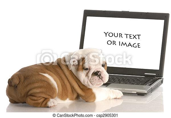 proprio, lavorativo, bulldog, testo, immagine, -, tuo, aggiungere, computer, inglese, cucciolo, o - csp2905301