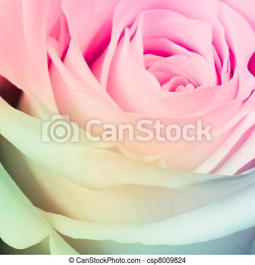 rosa, multicolor - csp8009824