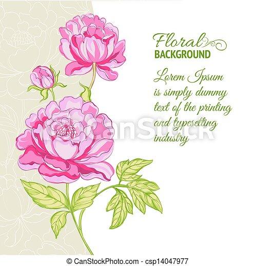rosa, peonies, campione, fondo, testo - csp14047977
