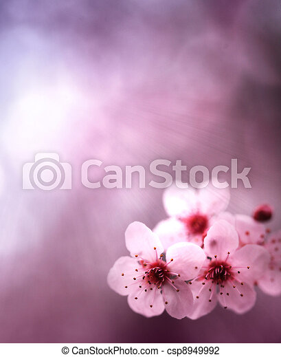 rosa, primavera, colori, fiori, fondo - csp8949992