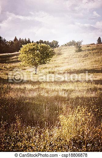 rurale, singolo, paesaggio albero - csp18806878