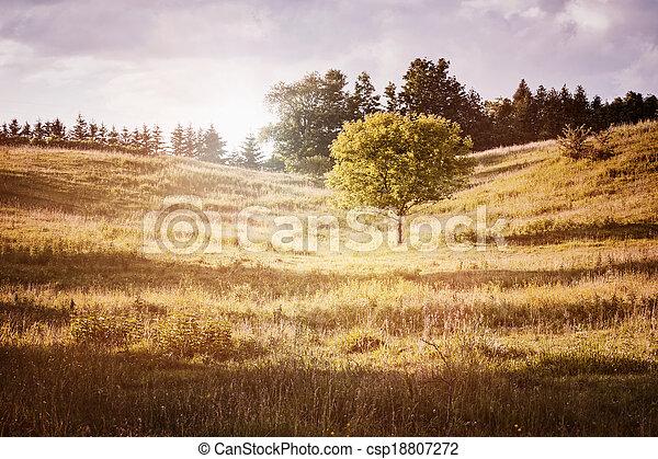 rurale, singolo, paesaggio albero - csp18807272