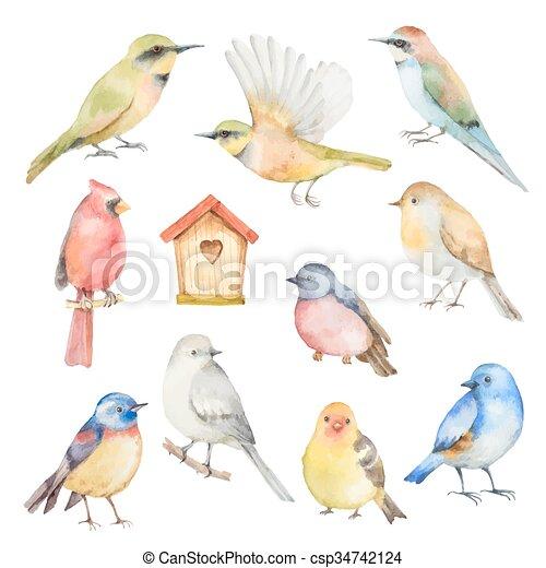 set, acquarello, birds., vettore - csp34742124