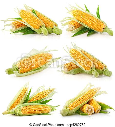 set, granaglie, verdura verde, fresco, foglie - csp4262762