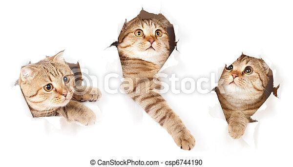 set, strappato, isolato, gatto, carta, buco, uno, lato - csp6744190