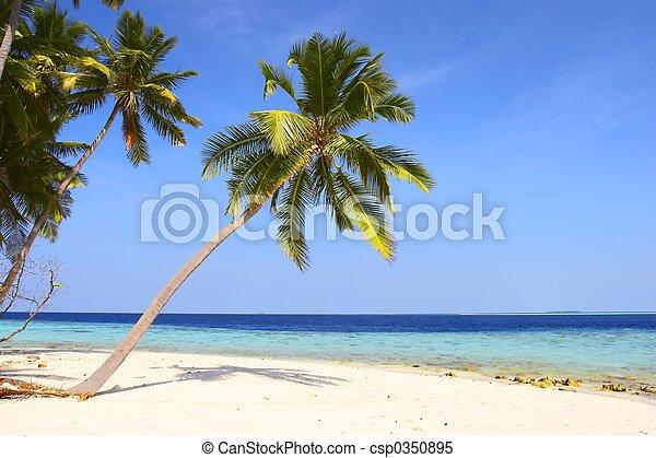 spiaggia, palmizi, bello - csp0350895