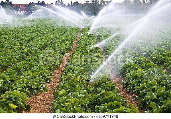 spruzzo acqua, agricoltura - csp9711948