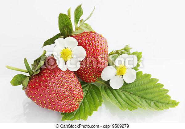 succoso, fragola - csp19509279