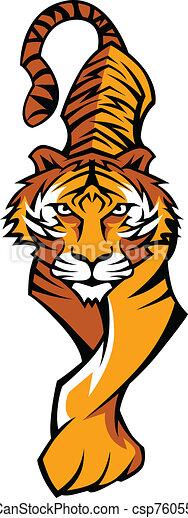 tiger, corpo, mascotte, vettore, vagando cerca preda - csp7605548