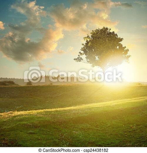 tramonto, paesaggio albero - csp24438182