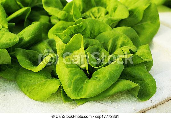 verdura, farm., insalata verde, hydroponic - csp17772361