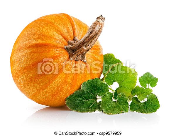 verdura, foglie, verde, giallo, zucca - csp9579959