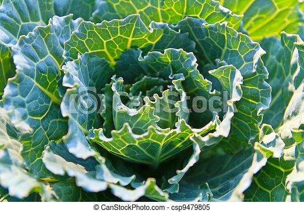 verdura, verde - csp9479805
