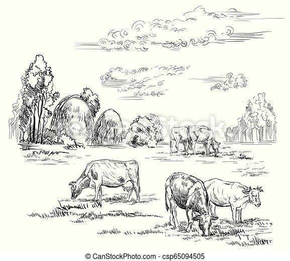 vettore, cows2, disegno, mano - csp65094505