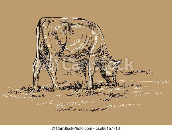 vettore, disegno, mucca, mano - csp66157710