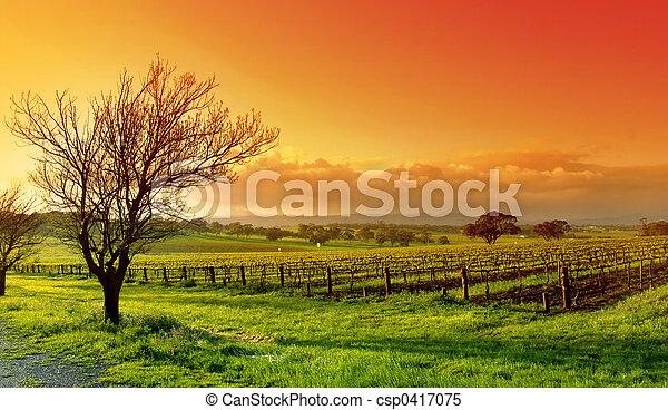 vigneto, paesaggio - csp0417075